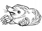 hand drawn sketch cartoon illustration of mole poster