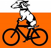 Vector illustrations of a dog riding a bicycle. poster