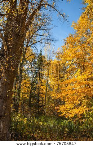 Fall Mountain Forest Landscape