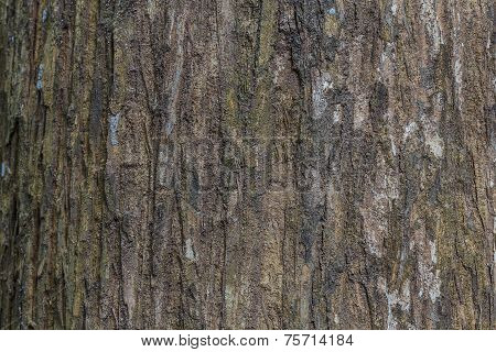 Tree Bark Texture Wood Texture/wood Texture Background