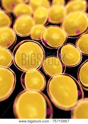 3d rendered, medical illustration of some fat cells