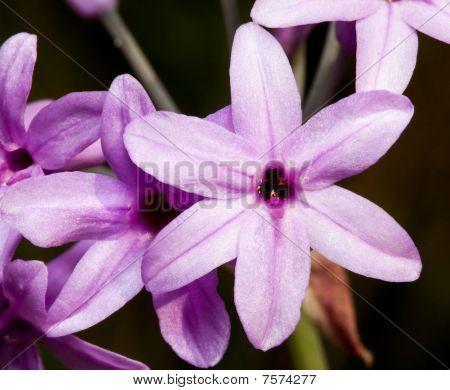 Makro der eine kleine lila Blume