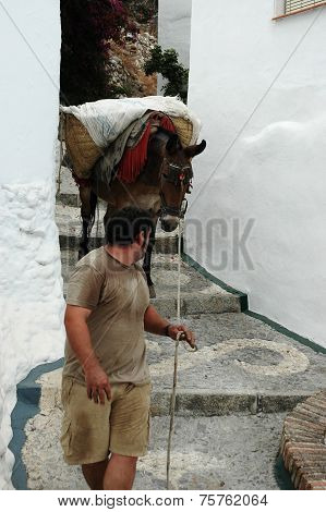 Man and a donkey