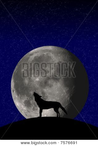Illustration of a wolf howling at the moon poster