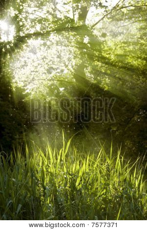 shafts of sunlight shining through a tree top