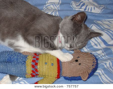 poster of A cat and her knitted teddy sleeping together