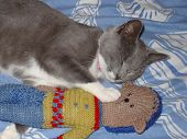 A cat and her knitted teddy sleeping together poster