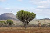 beautiful african scenery with wildlife poster