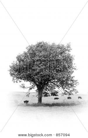 Tree In Monochrome