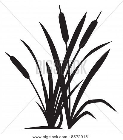 Silhouette reed