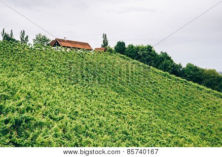 Farm on the hills of styria