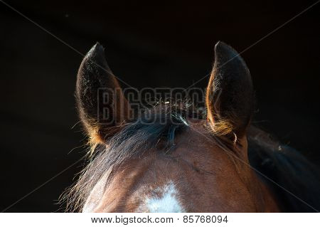 Ears brown horse close-up on a dark background