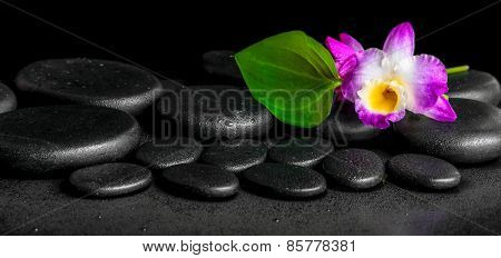 Spa Background Of Purple Orchid Dendrobium And Green Leaf Calla Lily With Drops On Black Zen Stones,