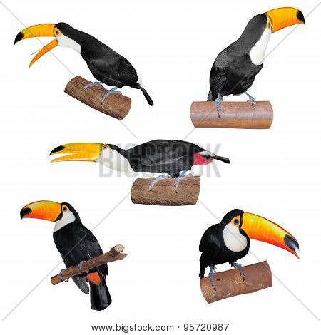 Set Of Toucans.
