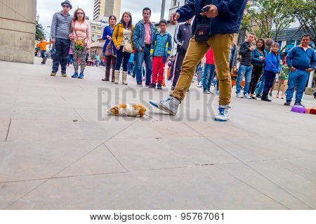 Guinea pig street gambling one animal is running towards its flock after it chose colorful upturned