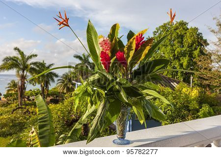beautiful tropical red ginger flowers