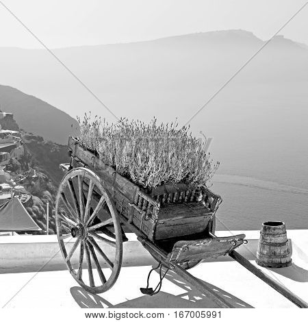 Handcart   Sea  In Architecture    Europe Cyclades Santorini Old Town White And The Sky