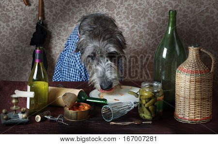 Irish wolfhound dog dressed in a blue shirt sitting at the table