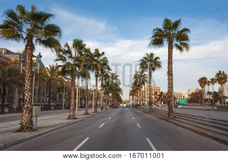 Barcelona Spain - January 02 2017: Palms on the roadside Passeig de Colom street in Barcelona