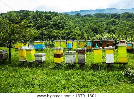 Colored bee houses on meadow in countryside of Montenegro.