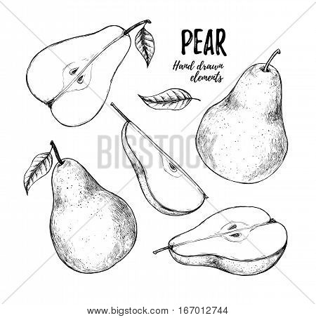 Hand drawn vector illustration - Set of slices pear pears and leaves. Design elements in sketch style. Perfect for menu cards posters prints packaging etc Sliced pears.
