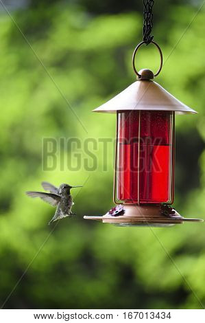This is a photo of a humming bird.