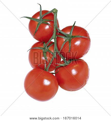 A few red tomatoes on bunch isolated on white background