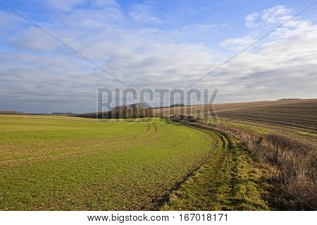 Wheat Crop And Bridleway