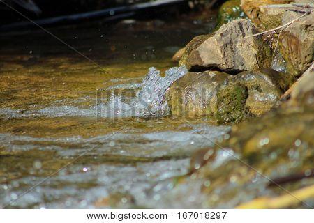 Água correndo livre num ribeiro entre as pedras