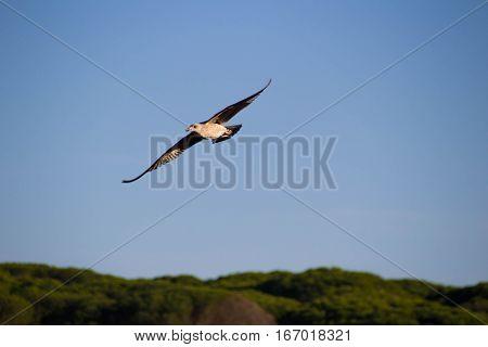 Gaivota livre a voar no céu com muita paz