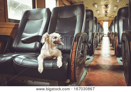 The cute dog travel by vintage railway train process in vintage style