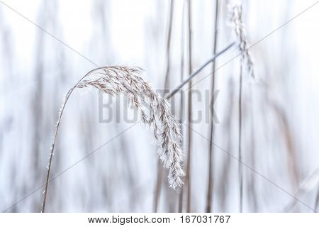 Charming frozen plants on blurred background