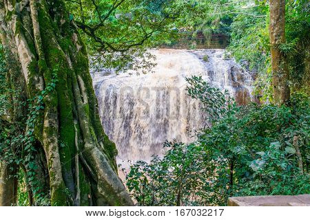Jungle tree with bindweed and moss and Waterfall Prenn in Dalat, Vietnam