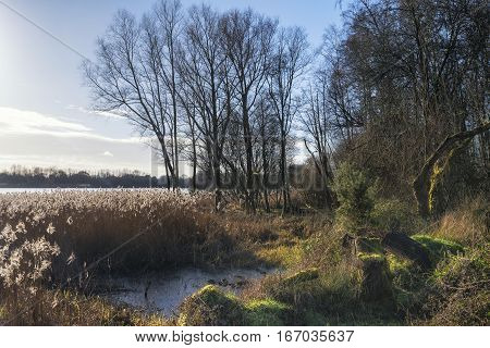 Beautiful Landscape Image Of Winter Reeds In Golden Early Morning Sunlight
