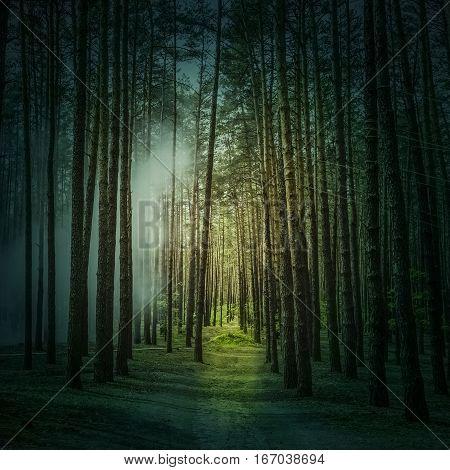 Mystic fantasy foggy wild forest in summer