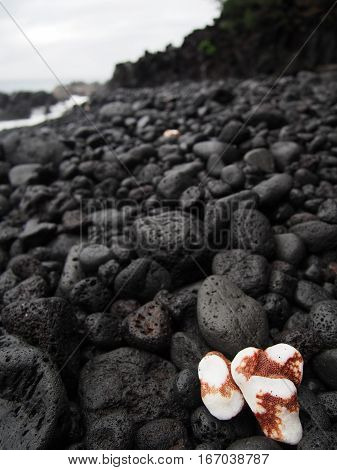 Two white coral pieces that have been smoothed by the ocean contrast with the black lava rock of this beach in Hawaii.