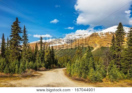 Walking trail in the swampy valley. Autumn in the Rocky Mountains of Canada. The concept of active tourism and eco-tourism