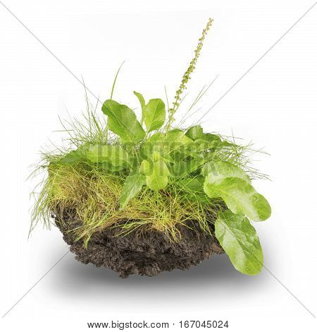 green grass and root isolated on white