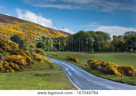 Westgarty Burn Scotland - June 4 2012: The A9 asphalt road follows the North Sea coast and cut through green hill slopes covered with yellow broom flowers. Passes farm house. Electrical line on hill top under blue cloudy sky. Green trees.