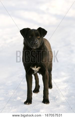 fauna, nature, animal, dog, black dog, friend, companion, pet, Canis lupus familiaris