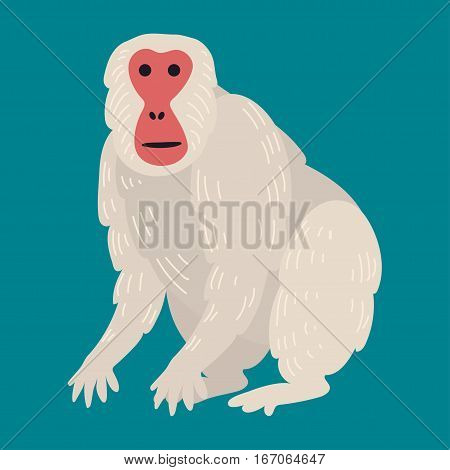 Macaque monkey rare animal vector. Cartoon macaque nature primate character. Wild zoo ape chimpanzee. Wildlife jungle isolated animal.