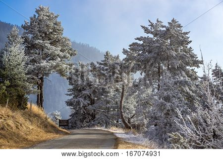 Moissiere Pass and the Sapet forest in winter with frost covered trees. Hautes Alpes Ecrins National Park Alps France