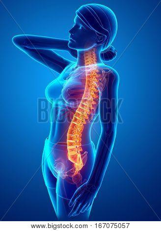 Women Feeling The Back Pain