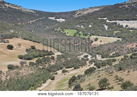 Mediterranean forest over quartzite mountains. Photo taken in Montes de Toledo, Ciudad Real Province, Spain.