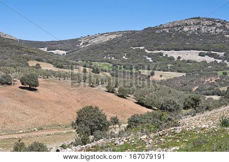 Mediterranean forest over quartzite mountains. Photo taken in Toledo Mountains, Ciudad Real, Spain.