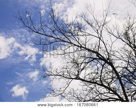 Winter Tree Branches death tree against cloudy blue sky