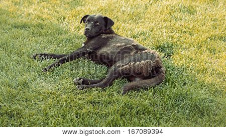 Cute homeless dog resting in green grass on a summer day, retro color.