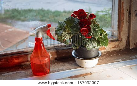 Red water sprinkler and houseplant in pot with big red flowers on weathered window sill, retro looking image from Russia.