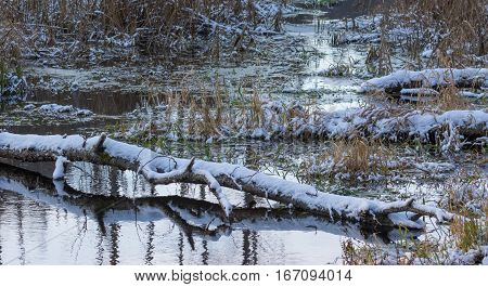 Broken birch tree trunk snow wrapped lying over water of Lesna River in winter, Bialowieza Forest, Poland, Europe