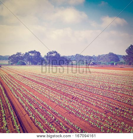 Rows of Fresh Young Green Seedling in Portugal Instagram Effect